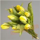 Tulipaner gult bdt.