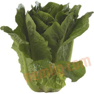 Romaine salat - Salater
