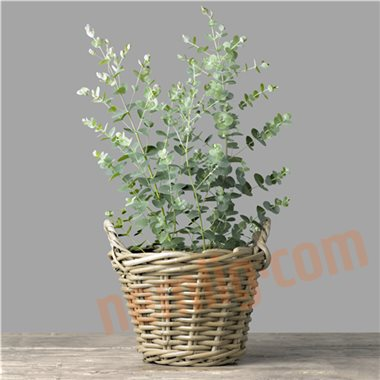 eucalyptus gr nne planter. Black Bedroom Furniture Sets. Home Design Ideas