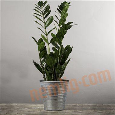 Grønne stueplanter